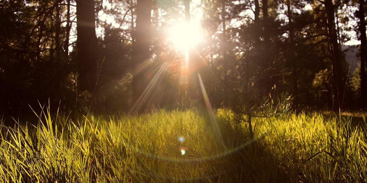 sunlight-867222